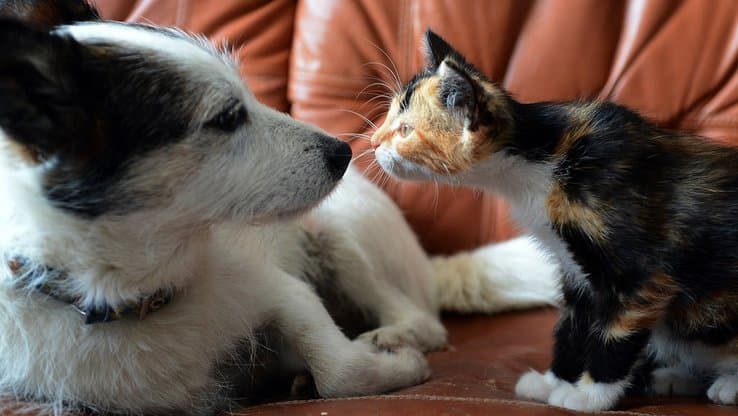 Covid-19:在狗和猫中发现的英国变种